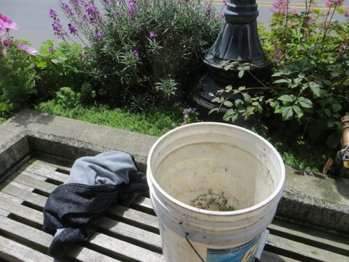 Public gardening: I had my bucket on this bench, and a jacket someone had left, and was just hooking up the hose when a woman came and shoved the bucket and jacket aside and lit up a cigarette. I did, softly and kindly (really!), get her to move to the planter nearby that I had already watered. (!!!)