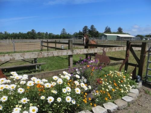 our little Red Barn garden