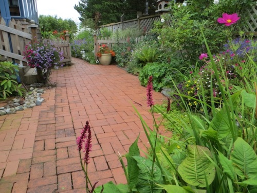"Jo always said the Persicaria 'Firetail' did not have enough ""bang for the buck"". We agreed Kathy, the new owner, might like it better than Jo does. (It is a favourite of mine because I like spikes.)"