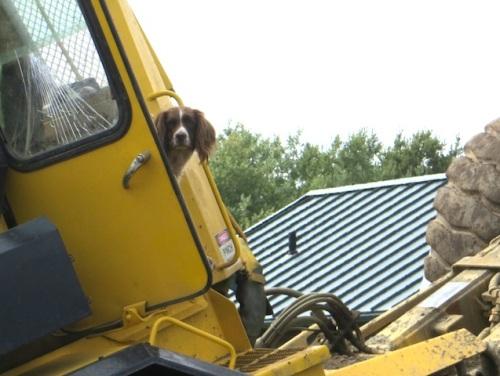 driver's helper