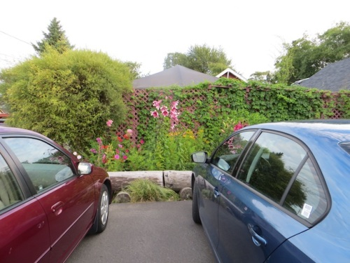 the garden behind parked cars