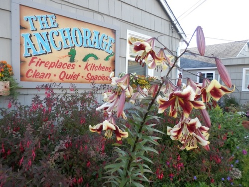 Earlier this year, deer ate one of the two big stalks of lilies that match the sign.