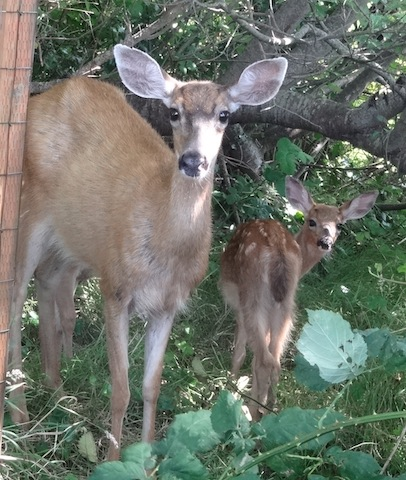 I find them adorable, outside my fence.