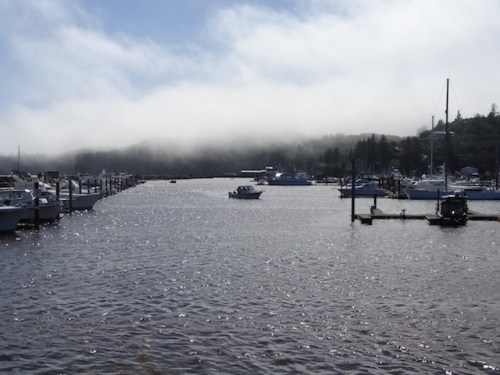 wind and fog on the marina
