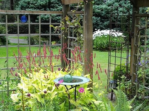 inside the fenced garden with Persicaria 'Golden Arrow'