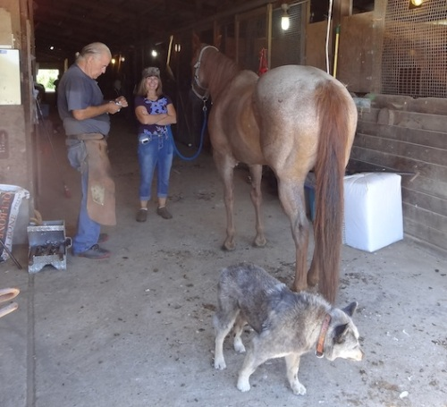 Diane and a horse shoer. Misty is eating hoof shavings.