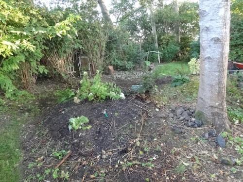 Hydrangea 'Bombshell' and Geranium phaeum 'Darkest of All'