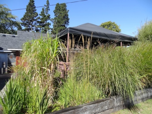 It must be pleasant to hear the ornamental grasses rustling when dining on the deck.