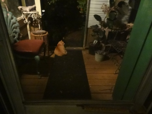 at night: Skooter surveys his domain from the front porch