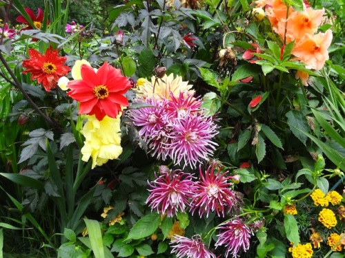 dahlias and gladiolas