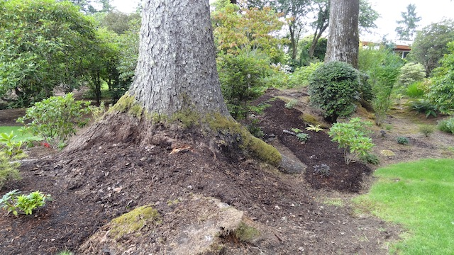 We all admired the pleasing contours of the newly revealed planting bed.