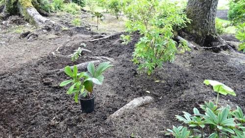 the ever expanding garden