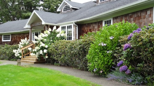 the house next door, once part of the Clarke Nursery property, with Hydrangea paniculata by the porch.