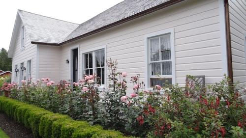front garden with Queen Elizabeth rose.