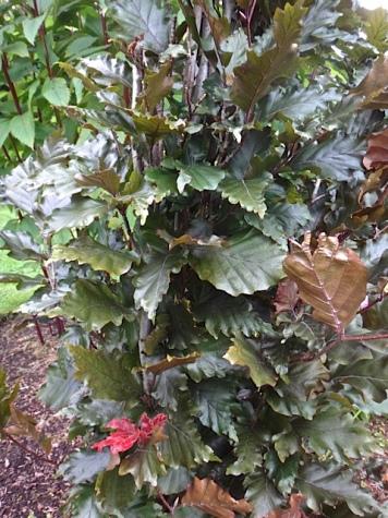 foliage study (Allan's photo)