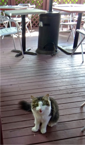 kitty hanging out on the dining deck