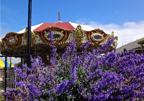 carousel planter (Allan's photo)