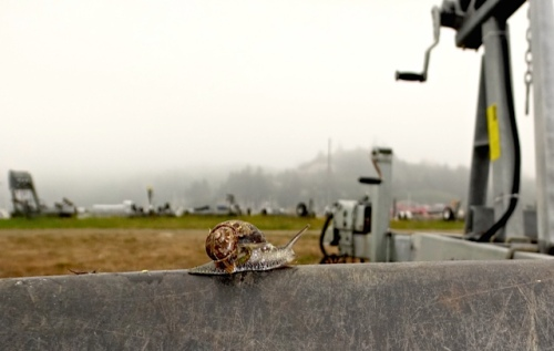 snail on boat trailer near our debris dump spot (Allan's photo)