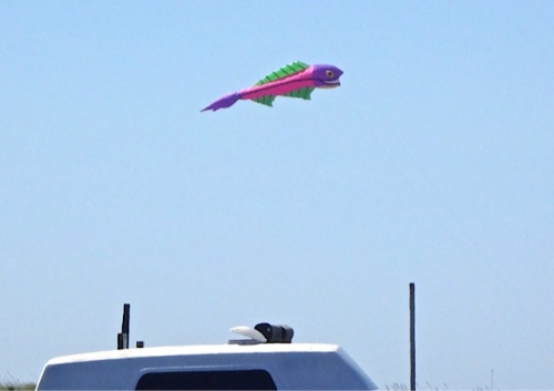 Sorry we did not make it out to get y'all some kite photos. (Allan's photos)