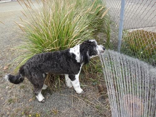 a cute dog named Jackson enjoying Allan's hose water