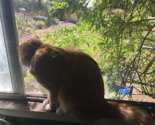 ...and looking out the window, longing for the garden. I hope it will remind him of Marilyn's.