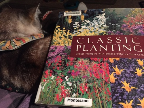 I finished Classic Planting and I recommend it.