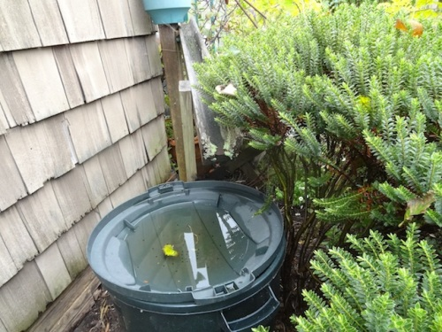 always the last rain barrel to fill