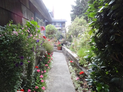 Jo's garden entry