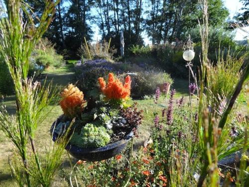 I have so enjoyed this tufty little orange non stop flowering celosias.