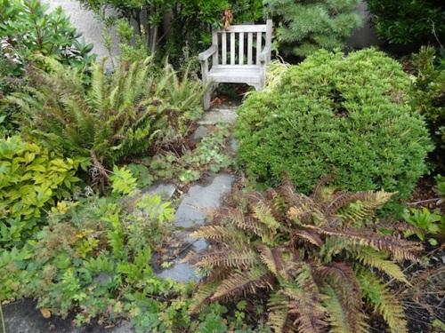 untrimmed ferns by a sit spot