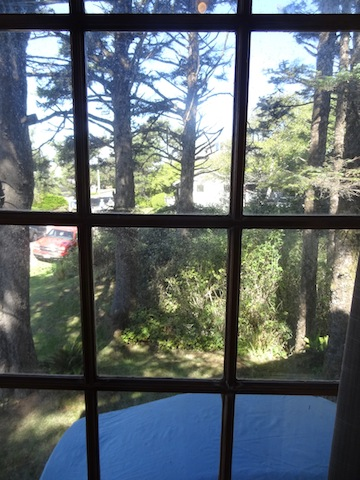 woodsy view from north window