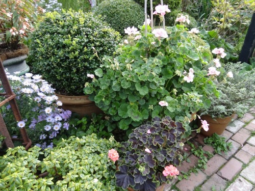 potted plants on either side of the brick entry path