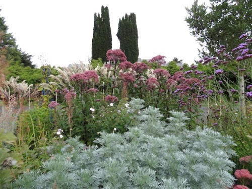 Artemisia 'Powis Castle' and Joe Pye weed