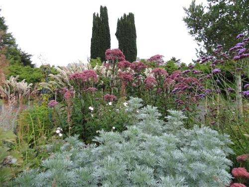 Artemisia 'Powis Castle' and Joe Pye weed