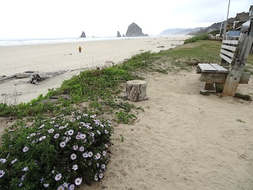 looking north to Haystack Rock