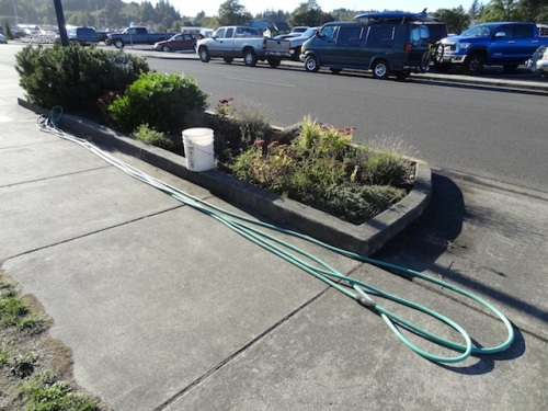 It was surprisingly strenuous to haul this hose.