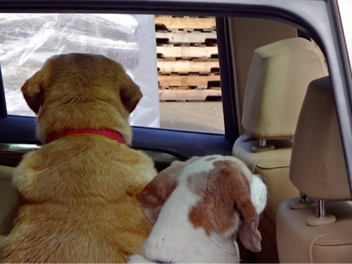 Kaci and her friend steadfastly watching for Lisa's return. (Allan's photo)
