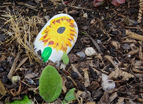 Another painted rock turned up in the garden.