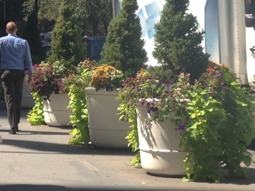 "Lorna: ""I thought of you each time I saw a planter. And I found myself stopping to see if there were any obvious signs of pilfering. Didn't see any. Think passers by are all in a hurry to get somewhere. """