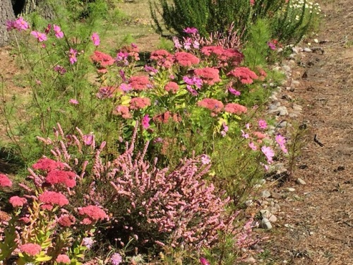 Diane's roadside garden