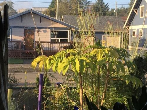 6 PM: felt gardener's guilt, kept reading