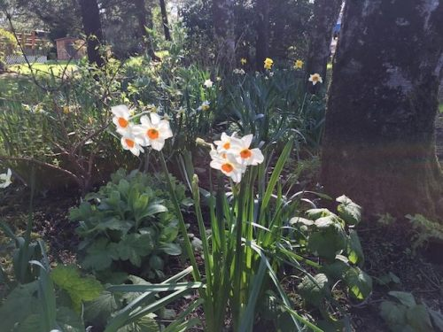 A frame narcissi last March
