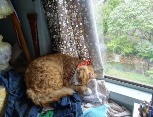 Skooter by Allan's window, on a comfy rag pile
