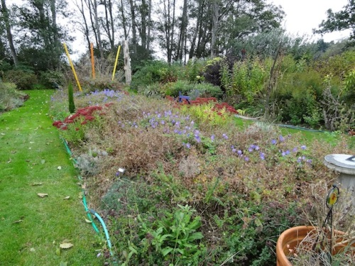 the center bed of the back garden