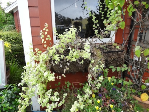 east window box lost almost everything to drying up
