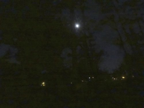 the lights of the port and the moon caught in the alder grove