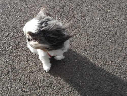 The wind was rather annoying.