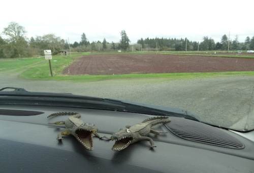 We exited past the WSU Research Station cranberry bogs.