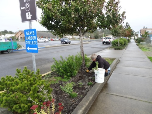 Allan planting by the Ilwaco Pavilion.