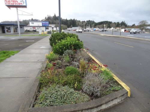 My favourite curbside garden by the Ilwaco pavilion. Fall clean up will come later.